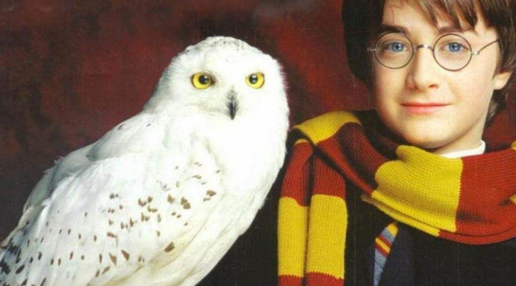 La Chouette dans Harry Potter à travers les Films